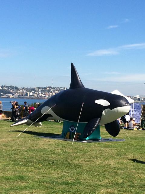 Run & Walk for Whales